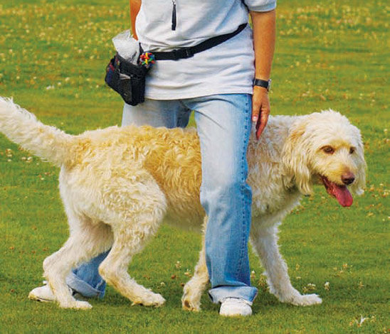 10 tricks to give your dog the X-factor