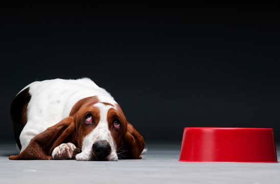 Why do dogs get hot spots?