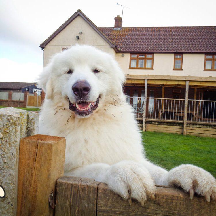 doggy-lodge-hotel-2021-61