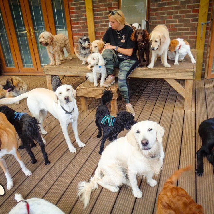 doggy-lodge-hotel-2021-67